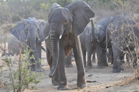 Yankari Game Reserve with largest surviving elephant population in Nigeria
